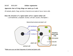 cellular organization definition and example